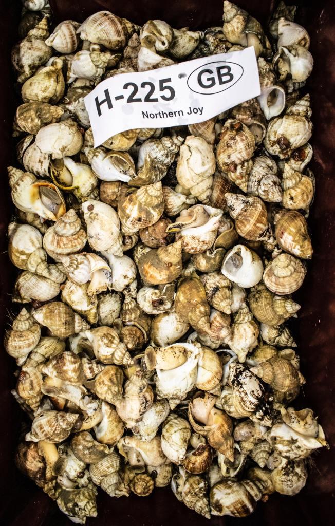 Muscheln aus Großbritannien zum Verzehr